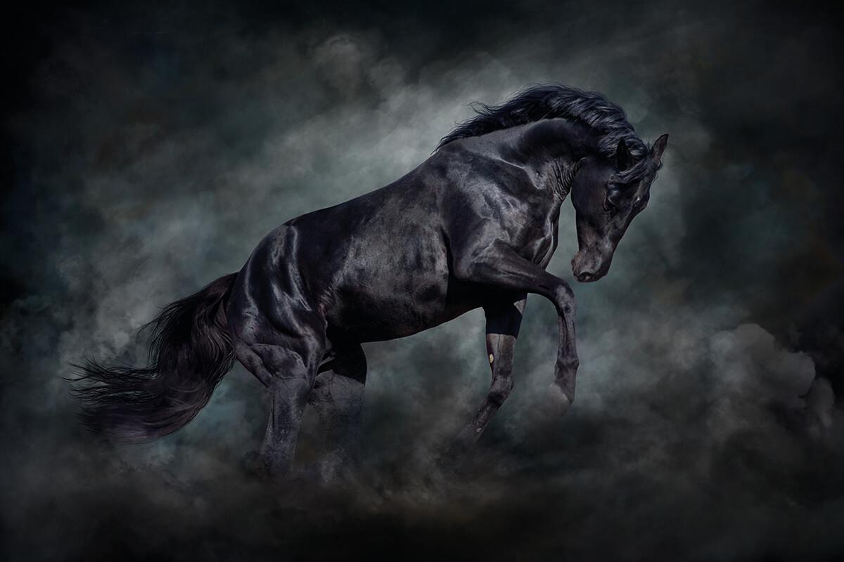 Premiumhästar