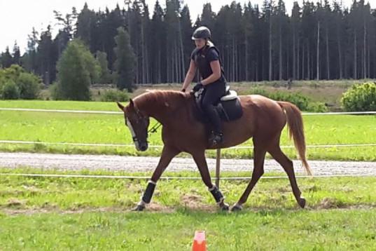 Häst sökes!!