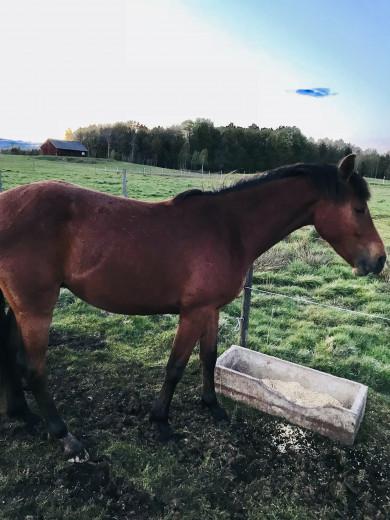 Trevlig unghäst