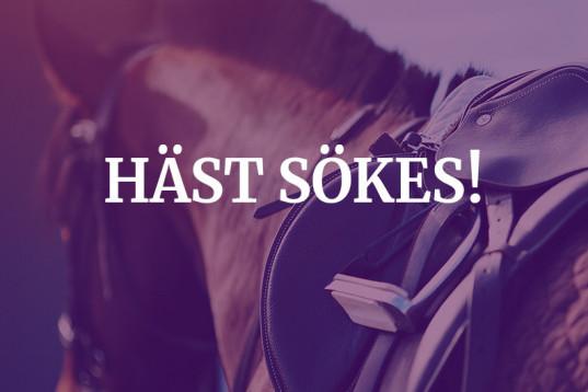 YR Häst till långvarigt hem!