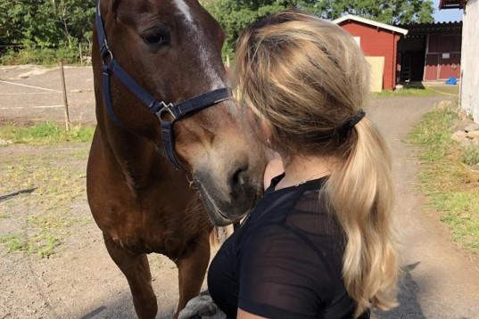 Foderhäst eller Medryttarhäst sökes till 17 årig tjej!