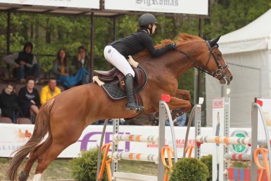 Shugarka 7yo mare for sale