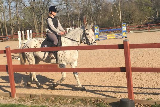Erfaren ryttare söker medryttarhäst