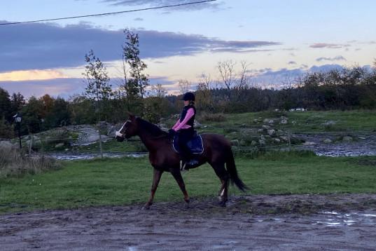 Seriös ryttare söker medryttarhäst!