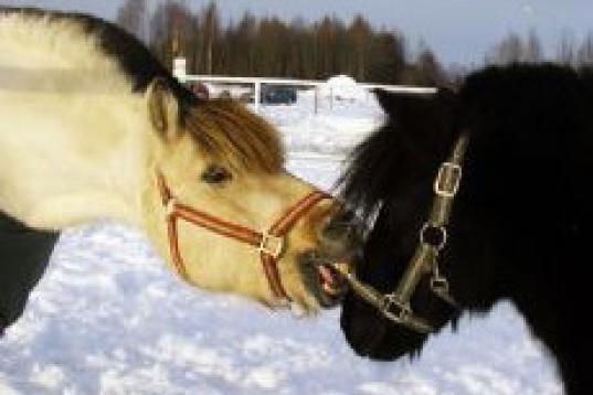 Erfaen HOPPRYTTARE söker häst! (Behöver inte vara hopphäst)