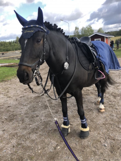 Fin allround ponny