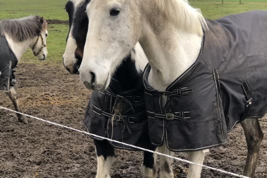För dig som gillar hästar och barn!