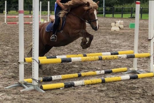 Söker medryttarhäst