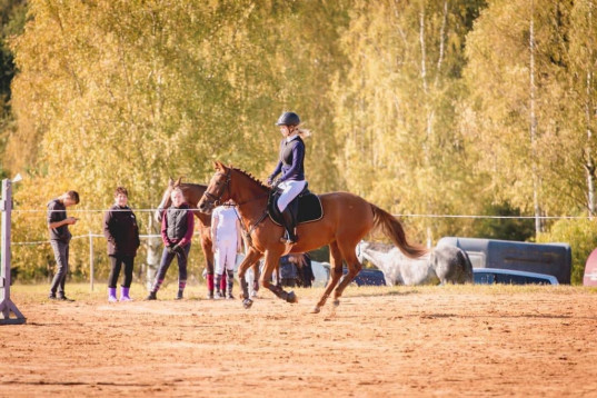 Small size 5 years old mare for sale!
