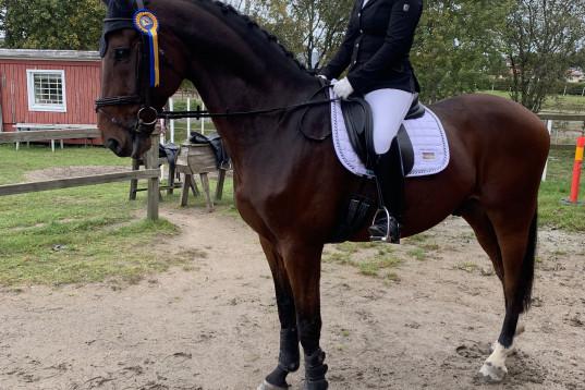 Perfekt Junior/YR häst