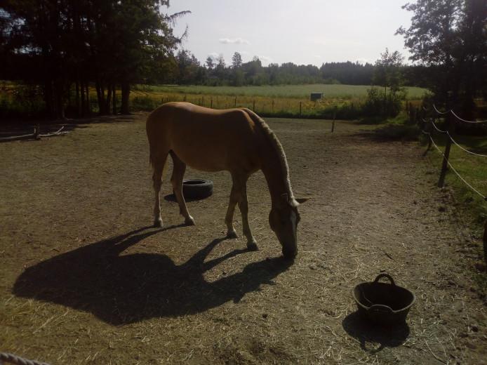 Ponnybyte