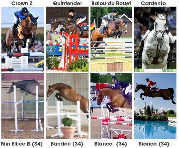 SÅLD: Crown Z - Quintender – Balou du Rouet - Cardento och så lite Bianca