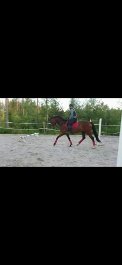 Framtida tävlingshäst