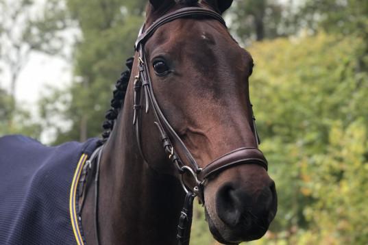 En häst som syns i mängden