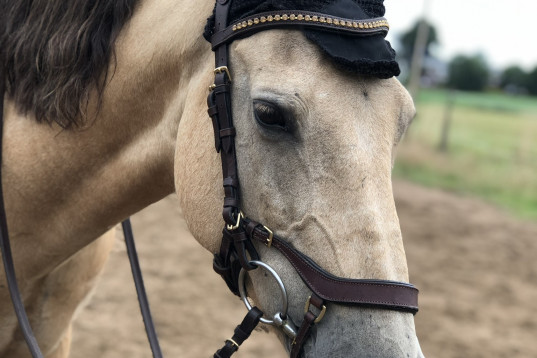 Härlig häst med ett stort hjärta!
