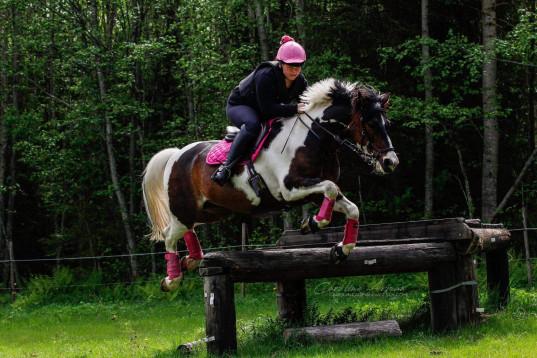 SM-ponny fälttävlan söker ny ryttare, inkl hö för säsongen!