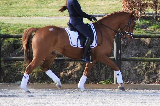 Skøn og dygtig ponny valack