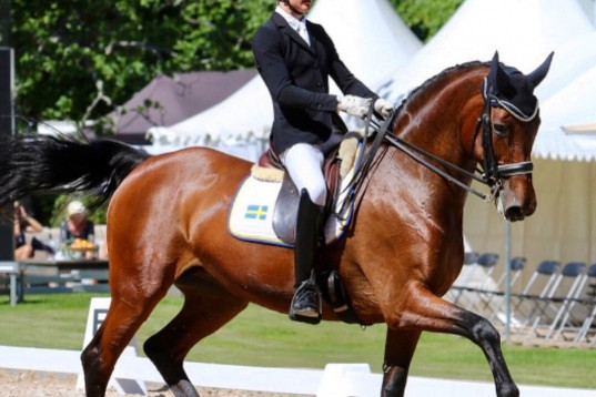 SM meriterad ryttare söker Young Rider häst
