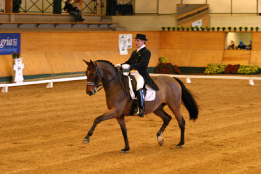 Häst- och ryttarutbildning