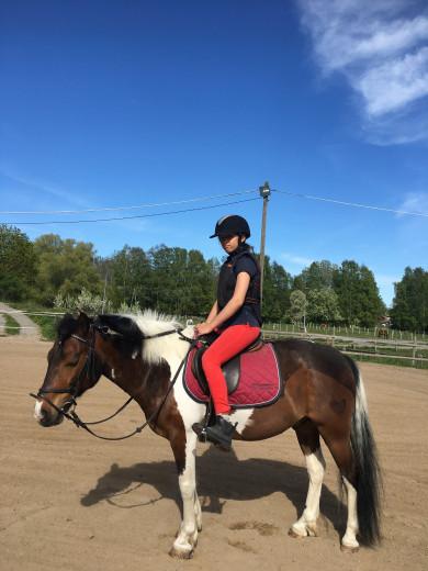 Sökes medryttarhäst