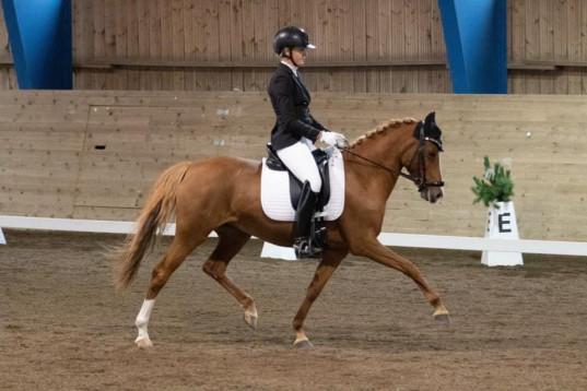 Fantastisk FEI ponny med ett hjärta av guld