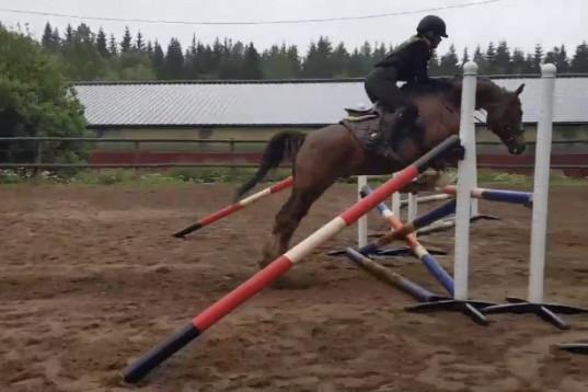 Ambitiös ryttare söker medryttarhäst/foderhäst att träna och tävla!