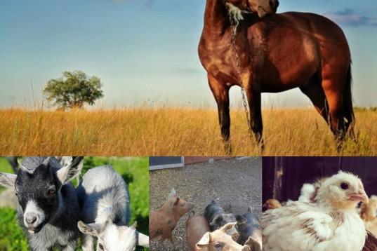 Medryttare med stor passion för djur!