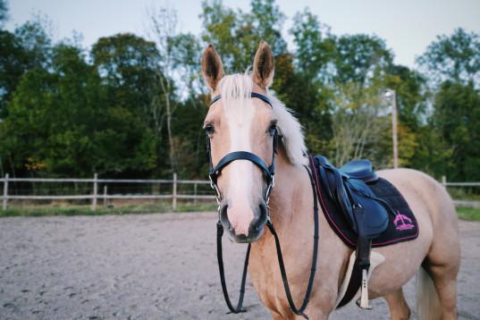 Talangfullt ponnysto