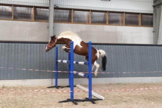 Sockersöt ponny med potential