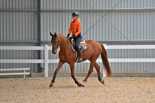 Super sweet 5 years old mare for sale!