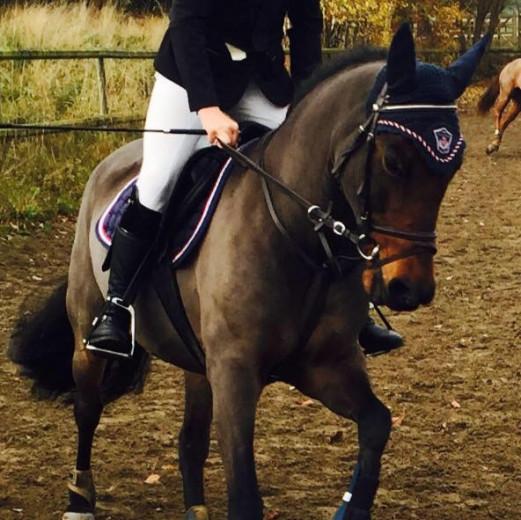 Energisk fin B ponny