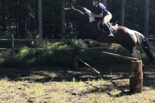 Medryttarhäst/ponny sökes