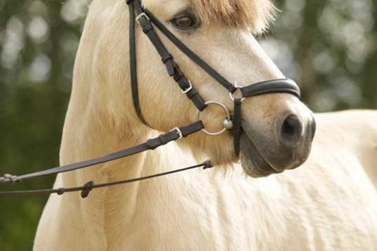 Erfaren HOPPRYTTARE finnes till storhäst eller ponny!