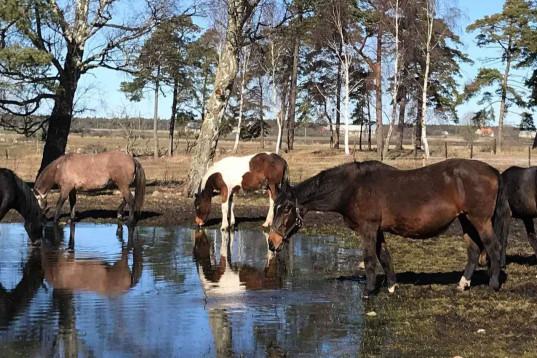 Volontärer sökes till liten hästgård