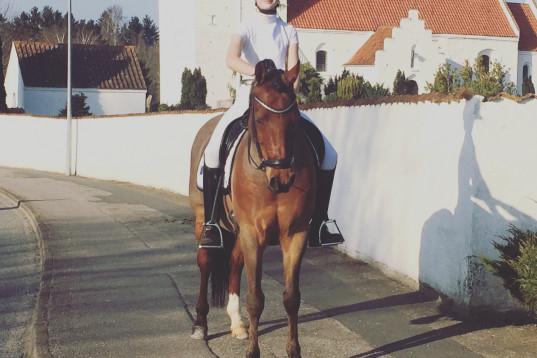 Læremester og FEI pony