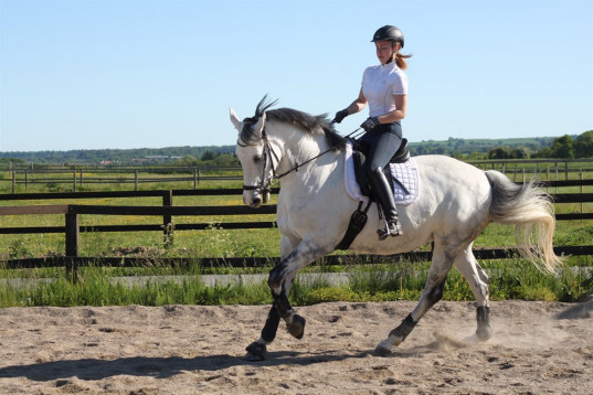 LOVELY DRESSAGE HORSE FOR THE FUTURE