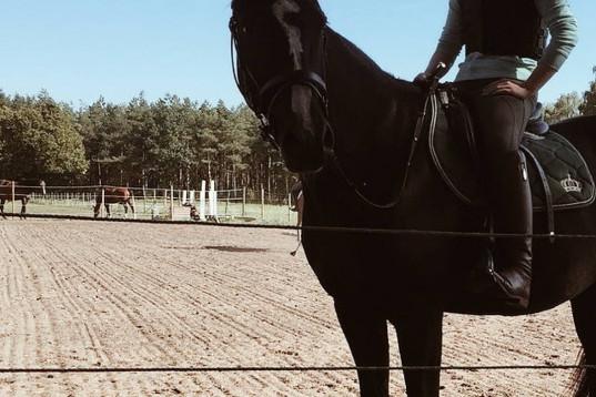 Foderhäst sökes till ambitiös ryttare