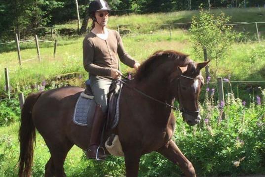 Vill Du ha hjälp med din häst?