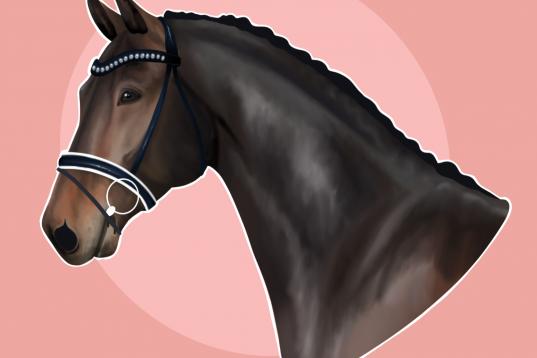 Årets julklapp: porträtt av din häst.