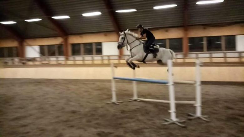 Hopp ponny för dom högsta klasserna *Prissänkt* !Byte mot föl/unghäst hoppstam