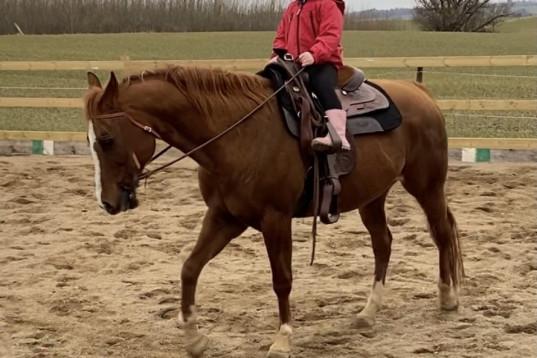 Ponny till nybörjare sökes