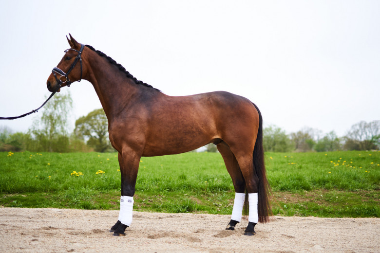 Salg Av Hest I Sverige