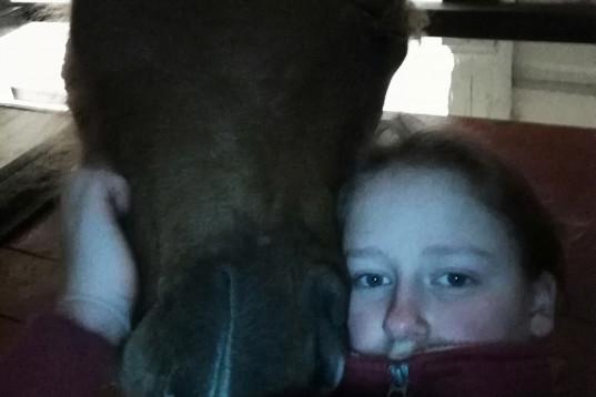 Ansvarsfull 18 åring med erfarenhet söker medryttarhäst