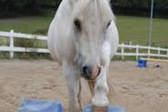 Söker medryttarhäst!! ❤️ Läs hela tack :)