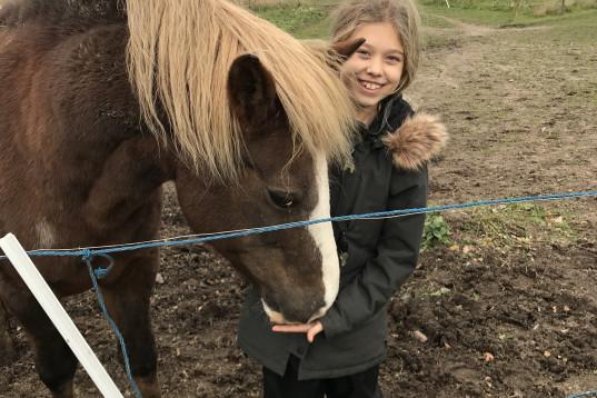 Söker en snäll medryttar häst/ponny!