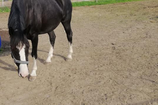 Medryttare sökes med intresse för markarbete av häst