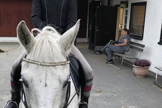 Söker medryttarhäst i Danderyd/Djursholm