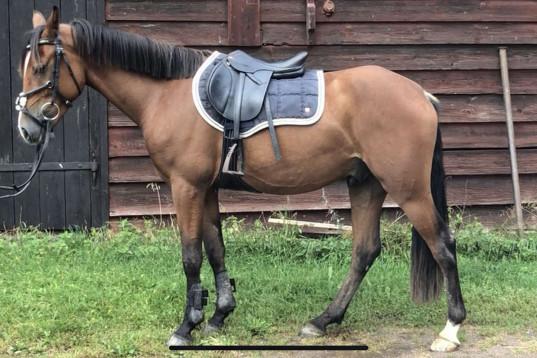 Ponny med kapacitet