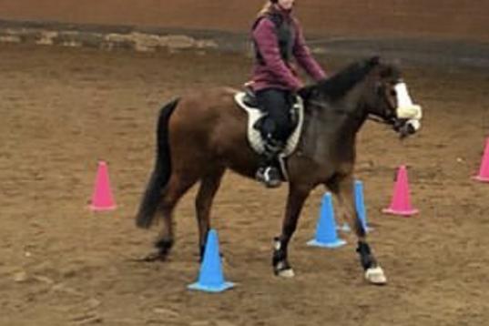 Söker medryttar häst/ponny