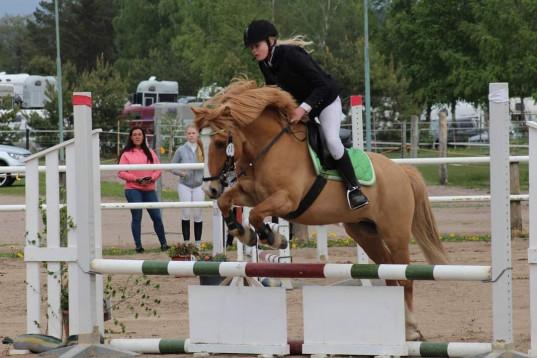 Fantastisk hopp ponny